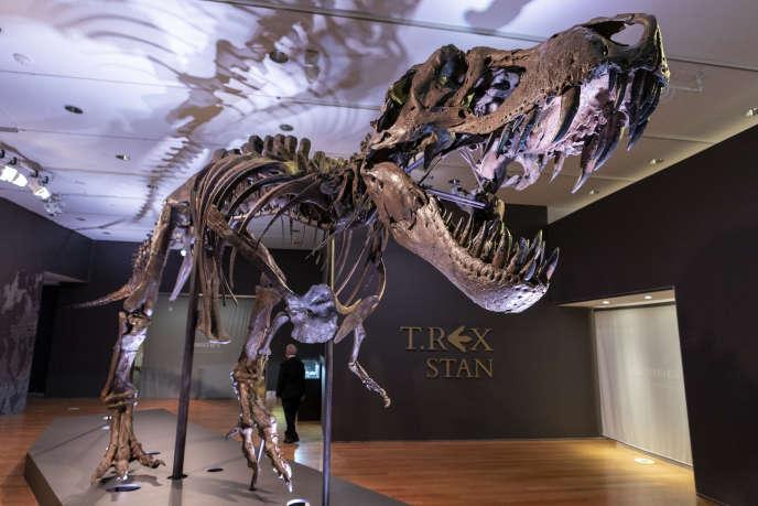 Stan, l'un des plus grands et des plus complets fossiles de «Tyrannosaurus rex» découverts, est exposé, mardi 15 septembre 2020, chez Christie's à New York.